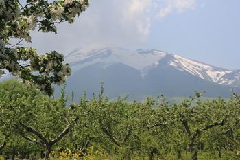 林檎園の岩木山.JPG
